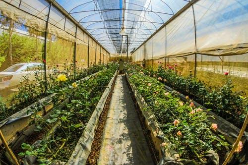 A comprehensive take on organic farming in Bangalore.
